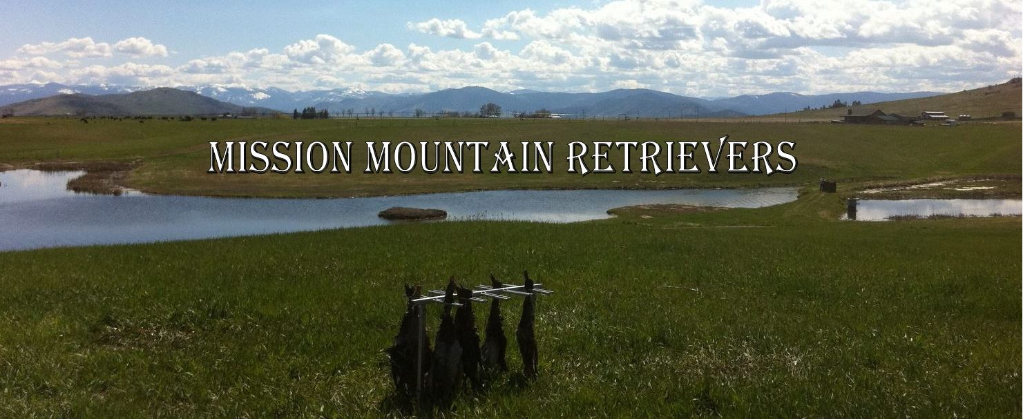 Mission Mountain Retrievers