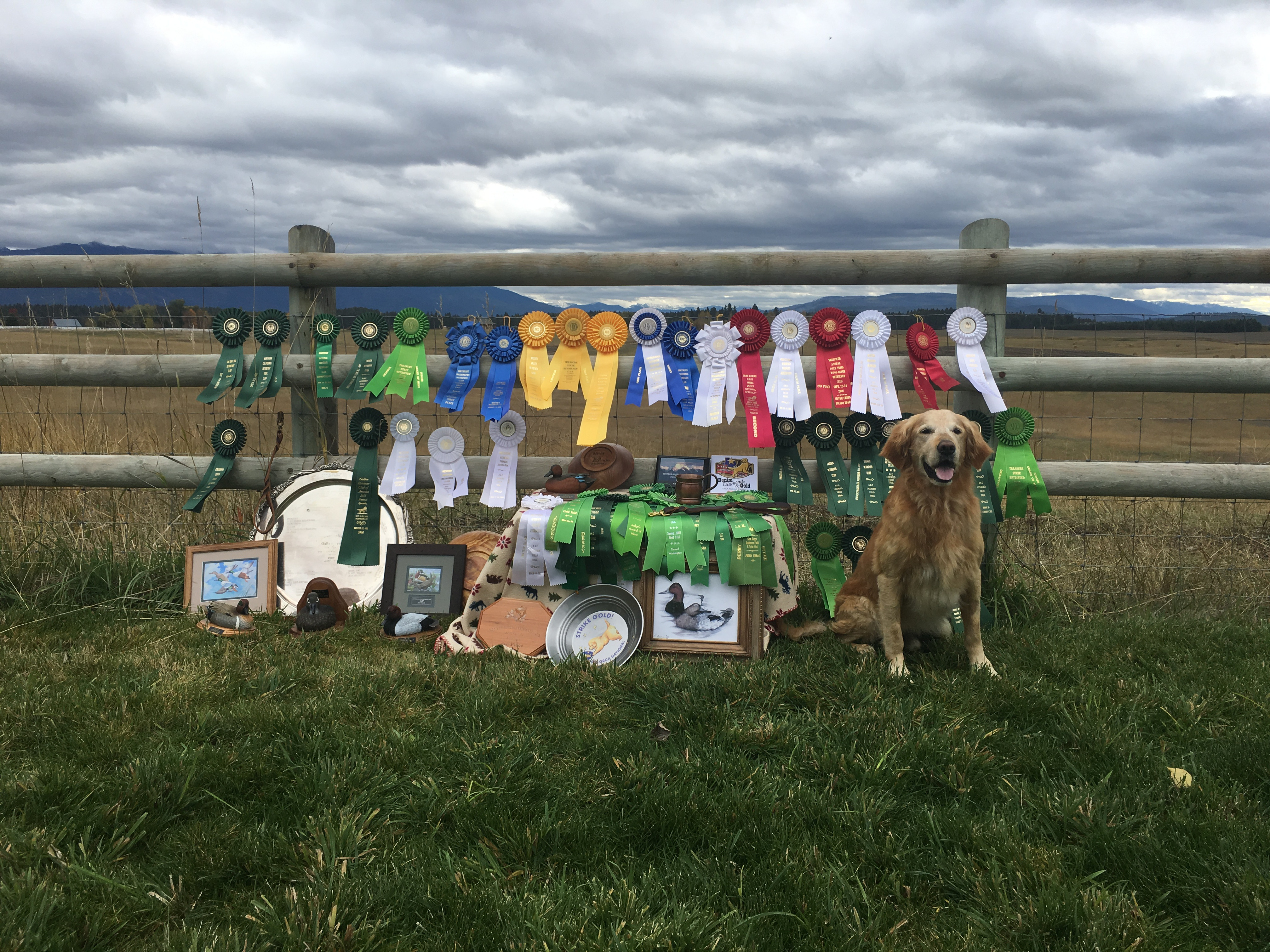 Results – Mission Mountain Retrievers